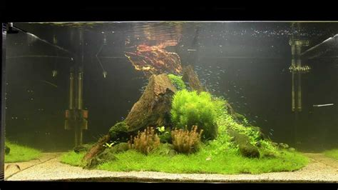 how to make an aquascape aquascape tutorial quot nature s chaos quot by findley the