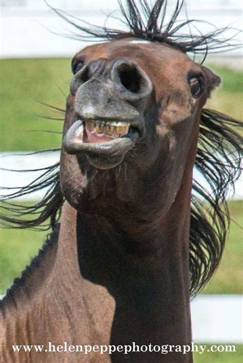 angryfrightened horse ref images  pinterest