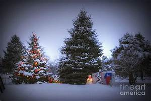 Outdoor, Christmas, Tree, Photograph, By, Thomas, Woolworth