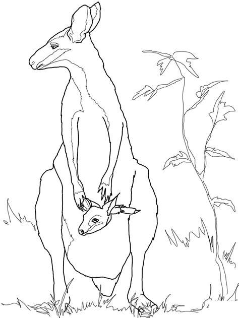 kangaroo outline drawing  getdrawings