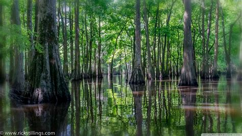swamp  hd desktop wallpaper   ultra hd tv tablet