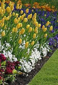 Planter Des Bulbes : planter des bulbes l 39 automne garden ideas flowers ~ Dallasstarsshop.com Idées de Décoration