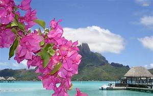 Purple flowers on a tropical beach wallpaper - Beach ...