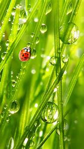 Beetle  Green  Drops  Stems  Plants  Background