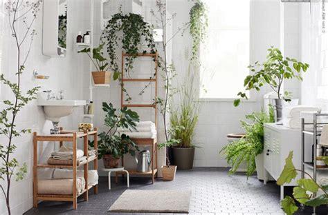mengenal tanaman hias pengusir serangga rumahliacom