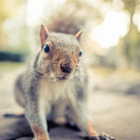 where to find squirrels in london londonist