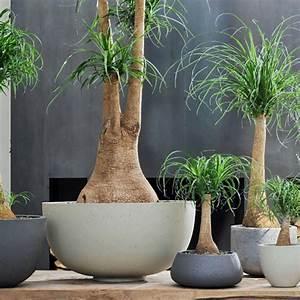 Zimmerpflanzen Für Dunkle Ecken : 452 best zimmerpflanzen images on pinterest house plants ~ Michelbontemps.com Haus und Dekorationen