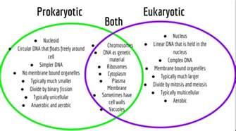 Prokaryotes Vs Eukaryotes Venn Diagram Worksheet.Similiar Prokaryotes And Eukaryotes Venn Diagram 9th Grade