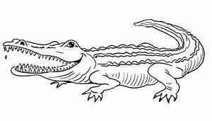 Ausmalbilder Baby Krokodil Lustige Ausmalbilder