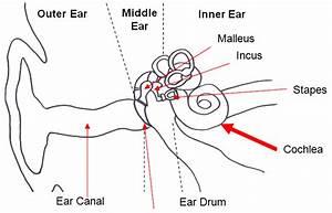 Hearing  Hearing Loss