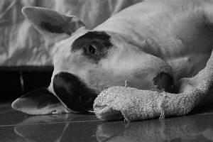 Kidney Tumor In Dogs