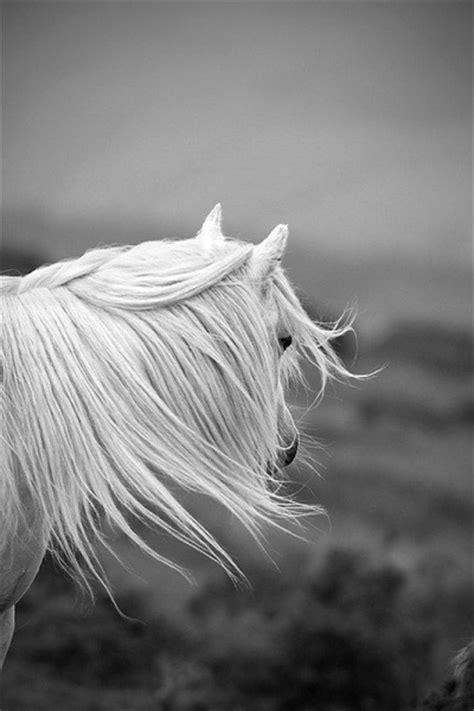 عکس اسبهای زیبا