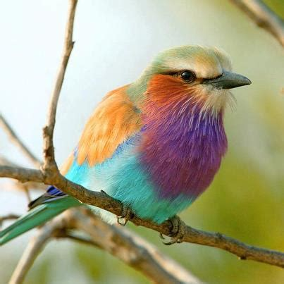 most colorful birds the most colourful bird beautiful things
