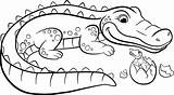 Crocodile Alligator Coloring Pages Drawing Croc Mother Easy Animals Egg Looks Vector Clipartmag Printable Getdrawings Shoe Rainforest Hatched sketch template