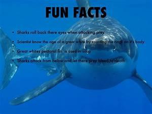 Fun Facts Shark U2019 Lisa W Tetting