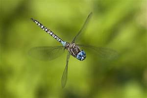 7 things you never knew about dragonflies | MNN - Mother ...