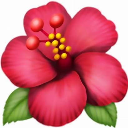 Emoji Flower Flor Transparent Clipart Webstockreview Pngs