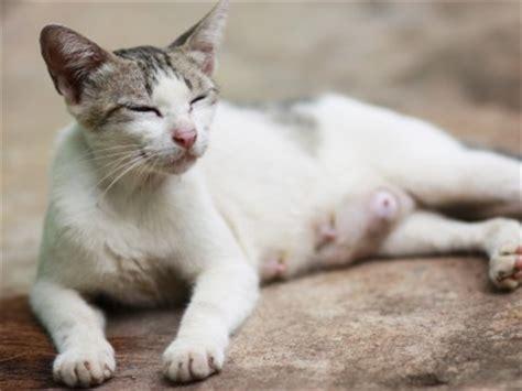 le chat au quotidien wikichat