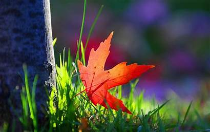 Wallpapers Leaf Grass Background Tree Screen Macro