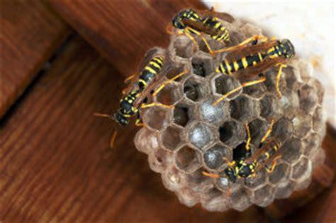 wespennest im rolladenkasten profis finden bewertetde