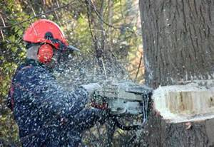 victim identified in tree trimming most effective home tools records