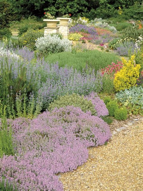 drought tolerant ground cover romance in the garden french country style outdoors