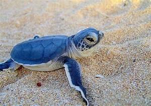 Cute Baby Turtles – WeNeedFun