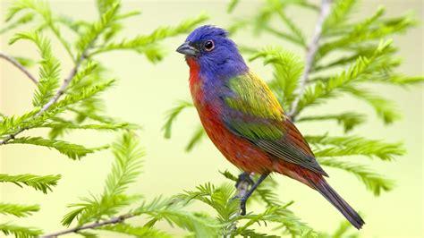 Stunning Bird Wallpaper  1920x1080 #14353