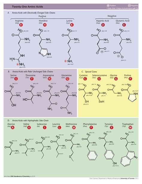 amino acid single letter code amino acid single letter code crna cover letter 32099