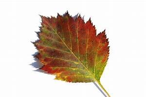 Free stock photos - Rgbstock - Free stock images | Autumn ...