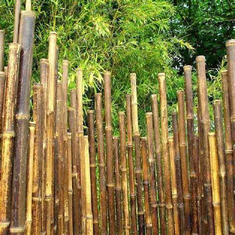 cloture en bambou le paravent bambou partout archzine fr