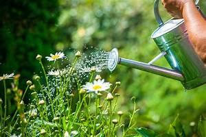 Pflanzen Bewässern Mit Plastikflasche : pflanzen mit bier gie en ein toller pflanzend nger ~ Frokenaadalensverden.com Haus und Dekorationen