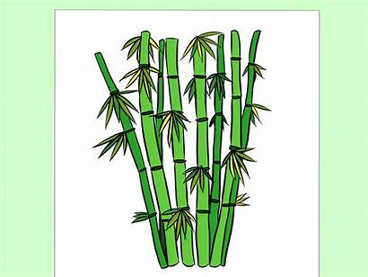 Drawing Draw Bamboo Tree Cartoon Wikihow Mosque