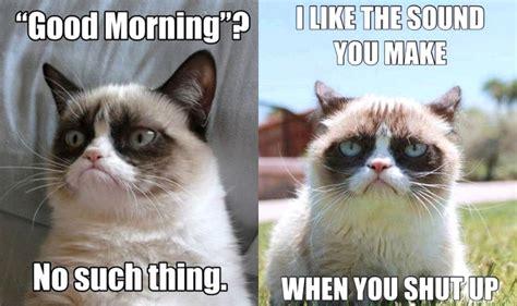 grumpy cat memes  instantly   grumpy