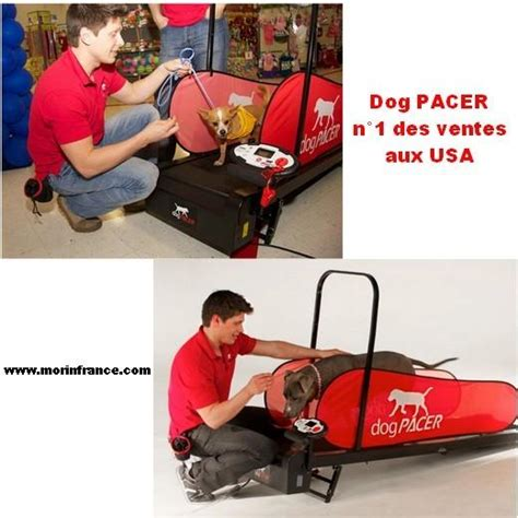 tapis roulant pacer home trainer pour chien