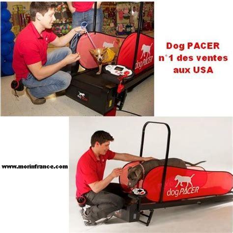 tapis de course pour chien a vendre id 233 e de la maison de