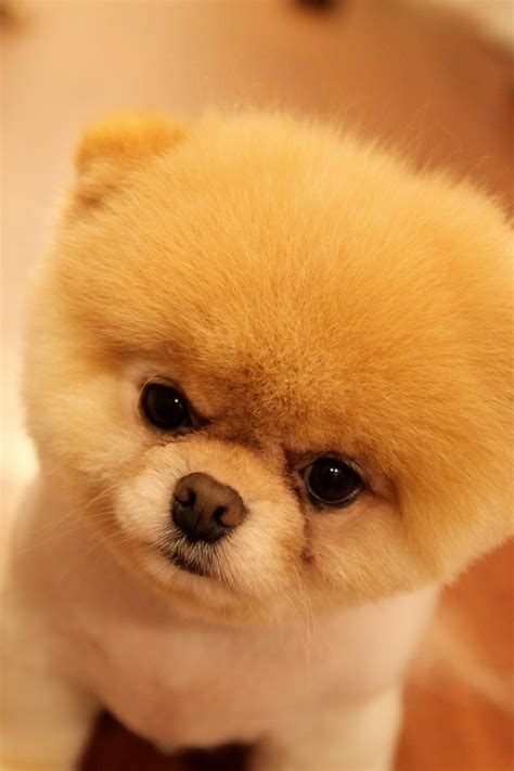 The Worlds Most Cutest Dog By Raiyukein On Deviantart