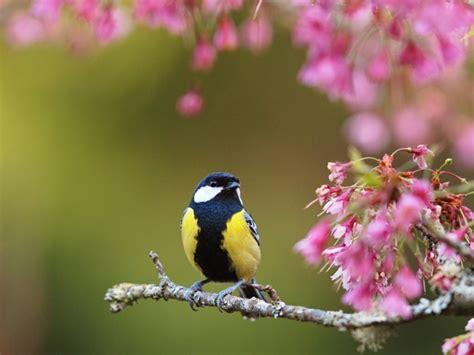 fruehlingsblumen im garten sind eine freude fuers auge und