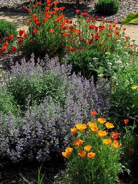 1000+ Images About Native Plant Gardening On Pinterest