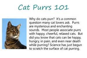 why do cats why do cats purr