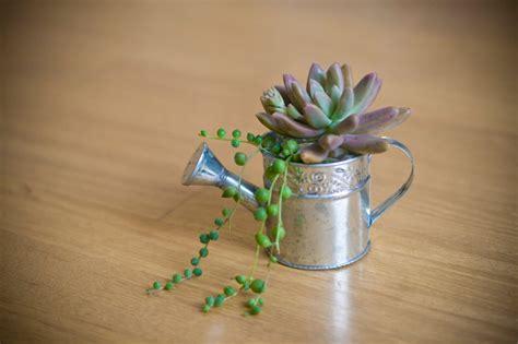 Succulent Mini Garden Metal Watering Can Succulent Plants