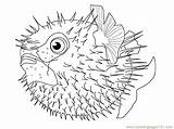Coloring Puffer Fish Pages Pufferfish Fishes Cartoon Printable Template Coloringpages101 Sketch Print Getcolorings sketch template