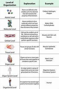 Biological Classification Worksheet