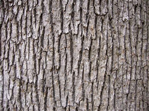tree bark texture free wood texture oak tree bark