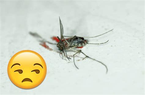Wie Oft Sticht Eine Mücke Pro Nacht by M 252 Ckenflecken An Der Wand So Werdet Ihr Sie Los