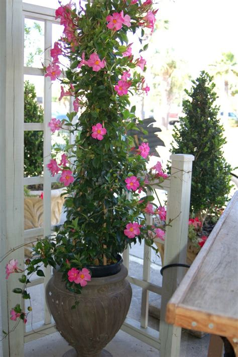 outdoor flowers potted plants and the necessary spring care fresh design pedia