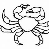 Crab Fiddler Coloring 99kb 300px sketch template
