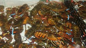Consider The Lobster Essay tdsb homework help how to stop falling asleep when doing homework creative writing major emory