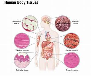 Ch01 General Terms  U0026 General Anatomical Terms
