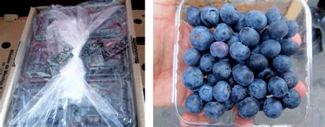 Modified Atmosphere Packaging Of Blueberry Fruit Effect Of Temperature On Package O2 And Co2 by Johnson Matthey Highlights Xtend 174 Modified Atmosphere